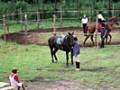 11209_051_agro_okopy_konie-150